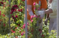 Gėlininkystės specialistas 2