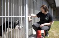 Gyvūnų prižiūrėtojas 1