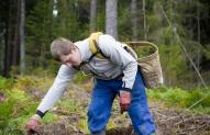 Miško darbininkas 3